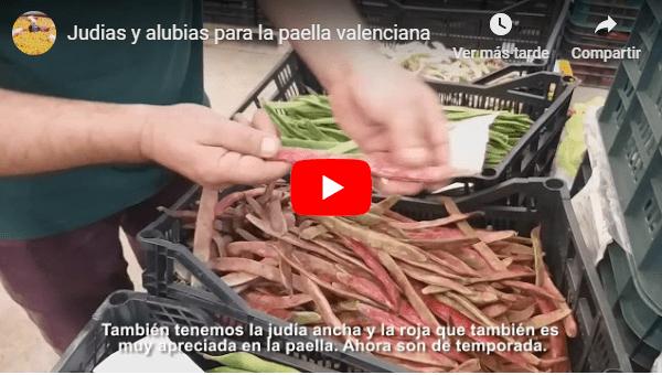 Judias y alubias para la paella valenciana.